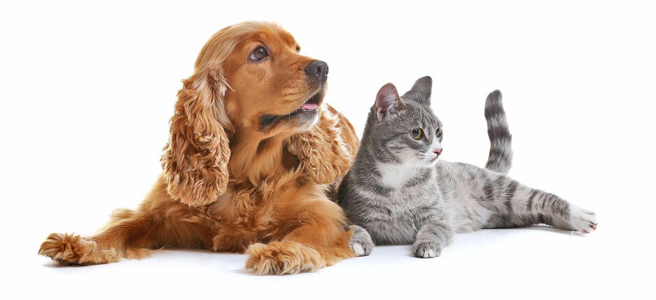 ペットを飼うときのルールとマナーを守りましょう