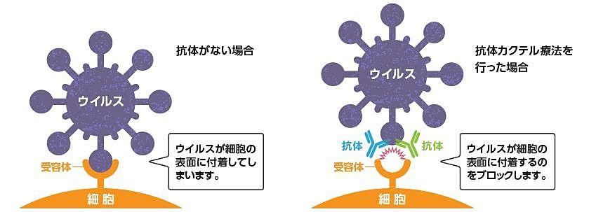 東京都は抗体カクテル療法の取り組みを進めています